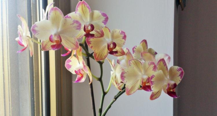 orquídeas expostas a luz