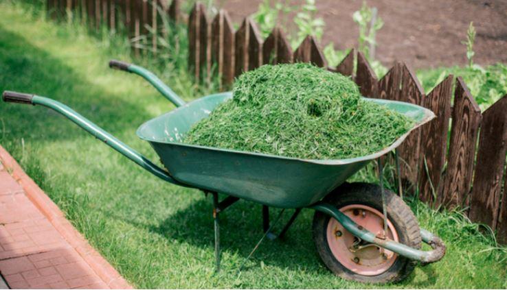 grama como herbicida