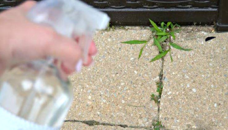 vinagre nas ervas daninhas