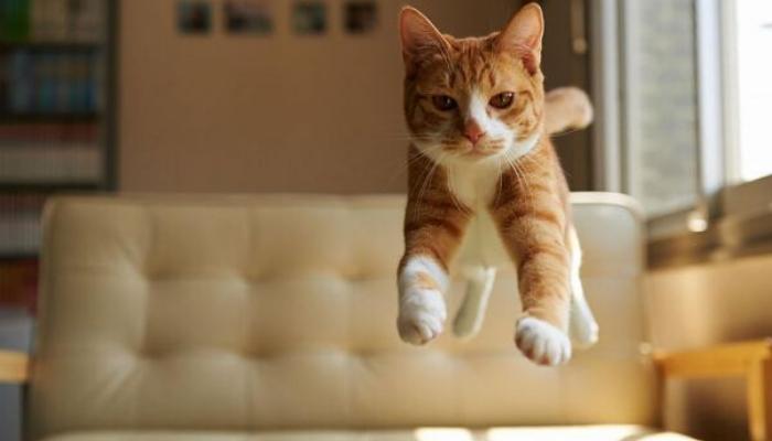 gato caindo de pé