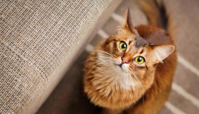 Gatos significam comportamento