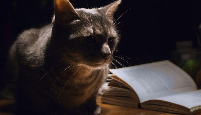 gato acordado de noite