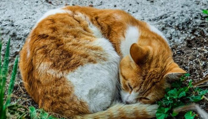 gato dormindo enrolado