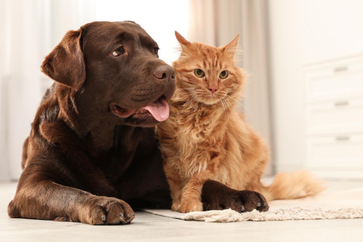 Eliminar mau cheiro pet