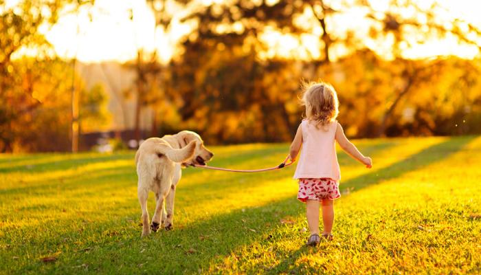 Razões-para-ter-um-animal-de-estimação