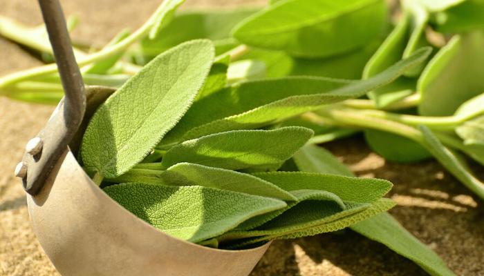 ervas-aromáticas-2